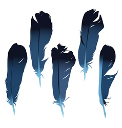 Feathers set vector image vector image