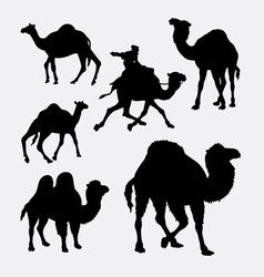 Camel and dromedaries animal silhouette vector