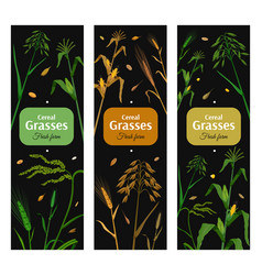 Cereal grasses vertical posters set vector
