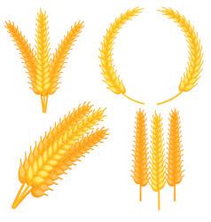 colorful cartoon ripe wheat ear set vector image