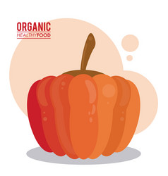 Organic healthy food pumpkin raw vector