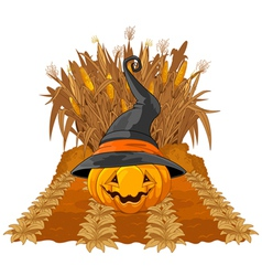 Pumpkin on corn maze vector image