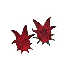 roselle vector image