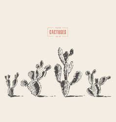 Set cacti cacti opuntia drawn sketch vector