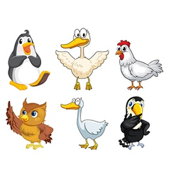 Six different kinds of birds vector image vector image