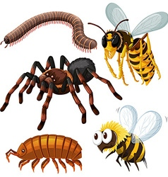 Different kind of dangerous insects vector image