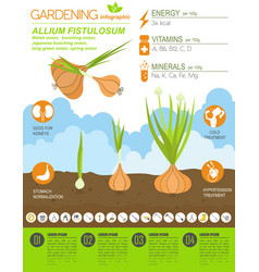 gardening infographic new 30 vector image