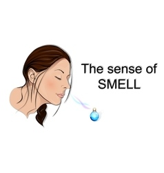 Sense of smell vector