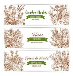 Spice and garden herbs sketch banner set vector