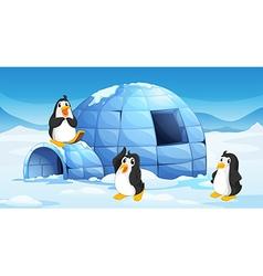 Three penguins near an igloo vector