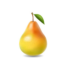 pear realistic isolated vector image