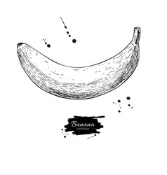 banana drawing isolated hand drawn object vector image vector image