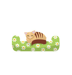 cute kitten sleeping on green pillow with vector image
