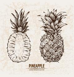 Digital detailed line art pineapple vector