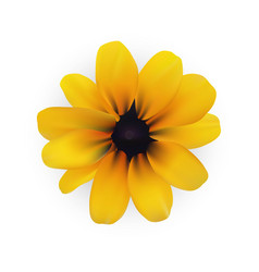 Yellow flower eps file vector