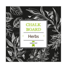 Background sketch herbs herbs - bay leaf vector