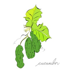 green cucumbers vector image