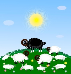 lonely sheep vector image