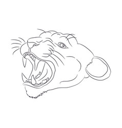 Portrait of a cougar drawing lines vector