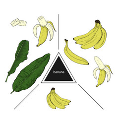 set of fruits whole banana banana slices and vector image