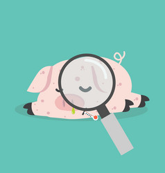 sick pig swine flu with magnifying glass vector image