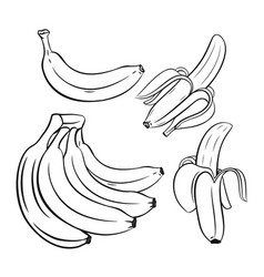 set of outline bananas vector image vector image