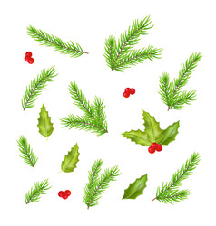 branches of fir tree and holly leaves vector image