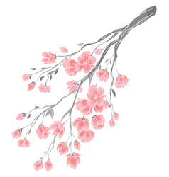 Branch of cherry blossoms vector