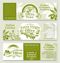 olive oil and olives product banners vector image vector image