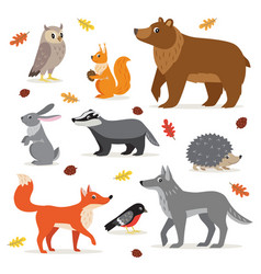 Set forest woodland animals isolated vector