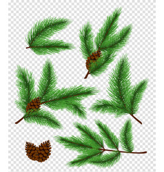 set of bright green color pine vector image