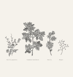 set with flowering branches trees vector image
