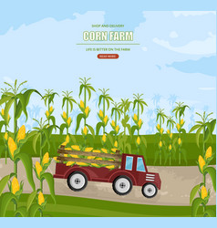 truck with corn harvest maize fields vector image
