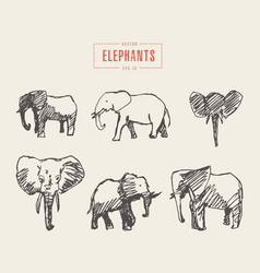 set realistic elephants hand drawn sketch vector image vector image