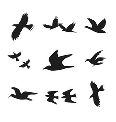 silhouette black fly flock of birds vector image vector image