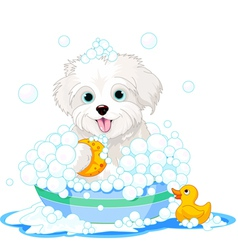 Fluffy dog having a bath vector image vector image