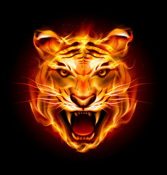 Head of a tiger in tongues of flame on black vector