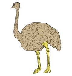 Sketch big ostrich standing on a white background vector