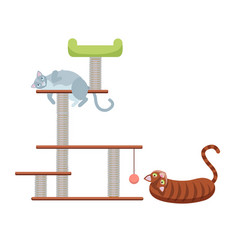 tabby kittens on scratching post scratching vector image