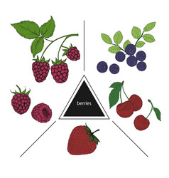 a set of berries blueberries cherries raspberries vector image