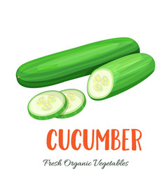 cucumber vegetable vector image