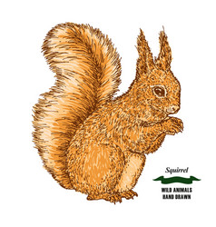 Forest animal squirrel hand drawn colored sketch vector