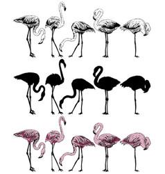 Set flamingo on a white background vector