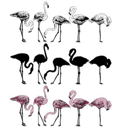 Set of flamingo on a white background vector