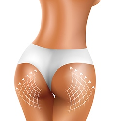 Perfect sexy firm buttock of healthy women in vector image