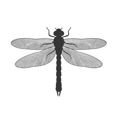 silhouette of dragonfly vector image