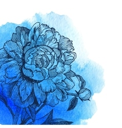 Ink drawn peony at blue watercolor vector image