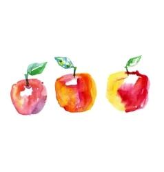 watercolor drawing apples vector image