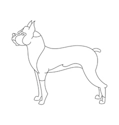 Boxer dog breed vector