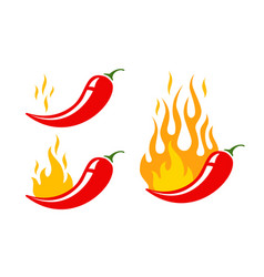 hot chilli pepper vector image